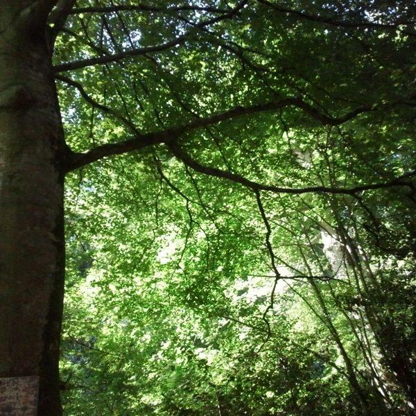 forêt de la sainteBaume