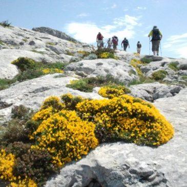 Randonnée à la Sainte-Baume, la crête des Béguines, le Paradis et le sentier Merveilleux