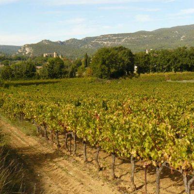 Au loin les falaises du Luberon