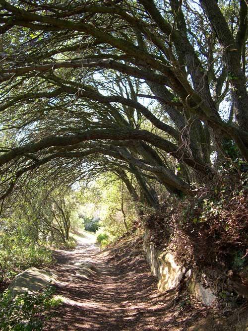 sentier ombragé vers vaugines
