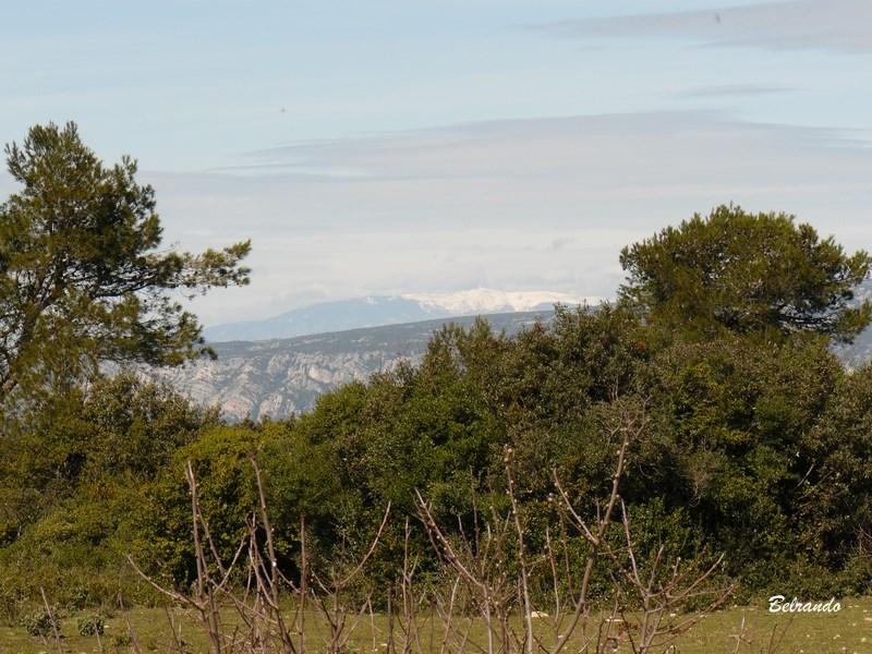 Vue sur le mont Ventoux depuis le GR 6 plateau du Defens