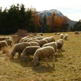 Balade au col du Morgonnet – Alpes de Haute Provence