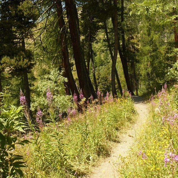 rando-monetier-puy-jaumar sentier forestier