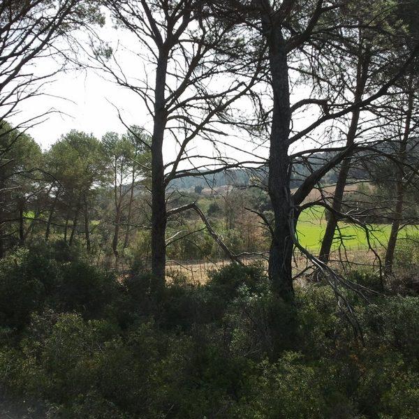 Vue sur les vignes de Camaïs