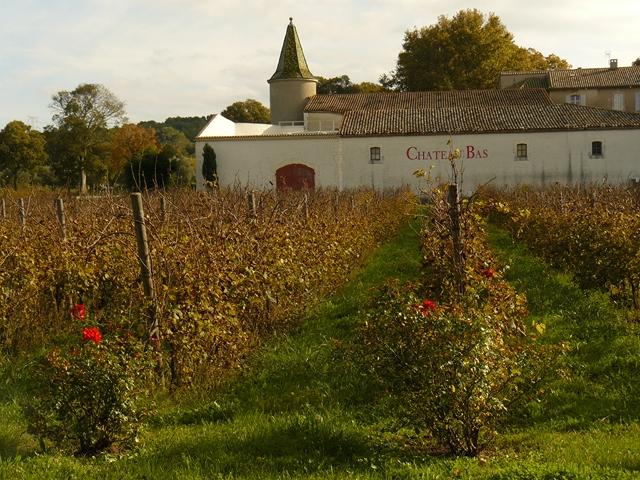 Vieux Vernegues Château-Bas  vignes