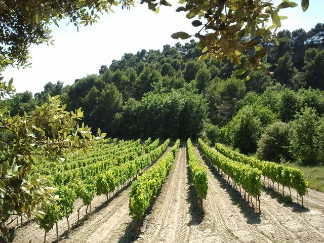 Etang de la Bonde vignes
