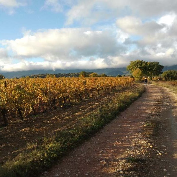 balade Saint-Martin de la Brasque vignes
