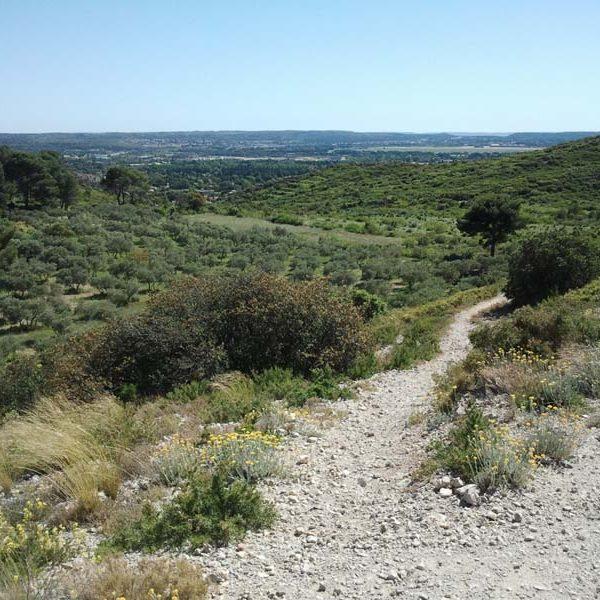 sentier du massif des Costes à Pélissanne