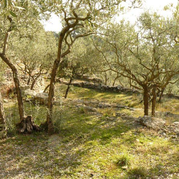 goult conservatoire terrasses et oliviers