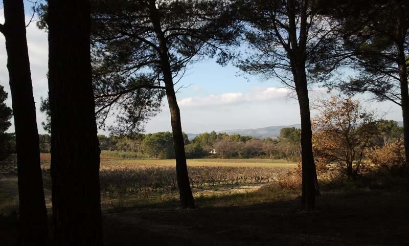 Chemin du collet Redon Saint Cannat