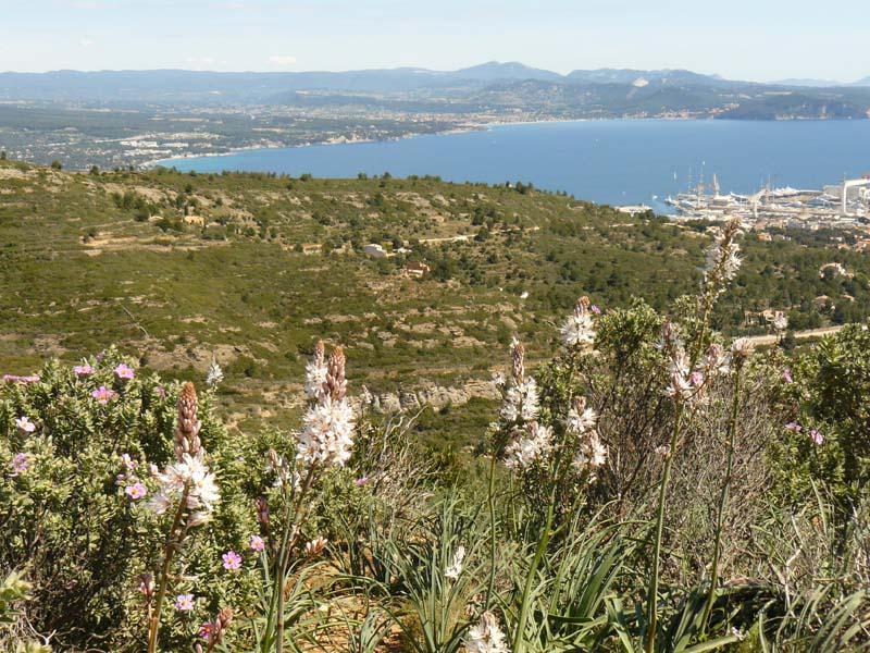 Baie de la Ciotat et fleurs d'asphodèles