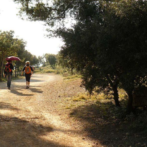 sainte-victoire piste vers Roque Haute