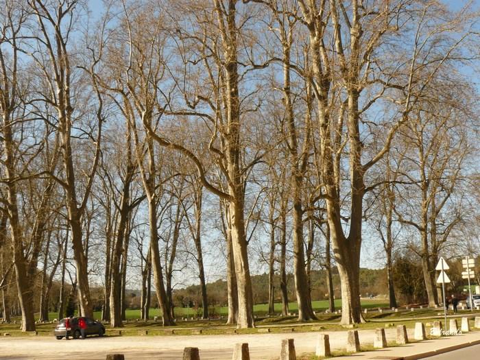 Parking du Tholonet et ses platanes
