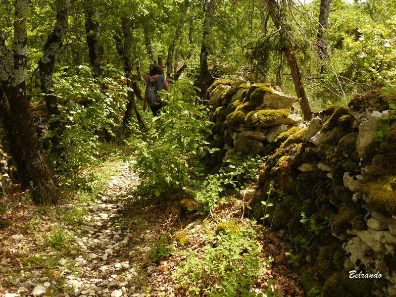 chemin creux sous les chênes gr 92