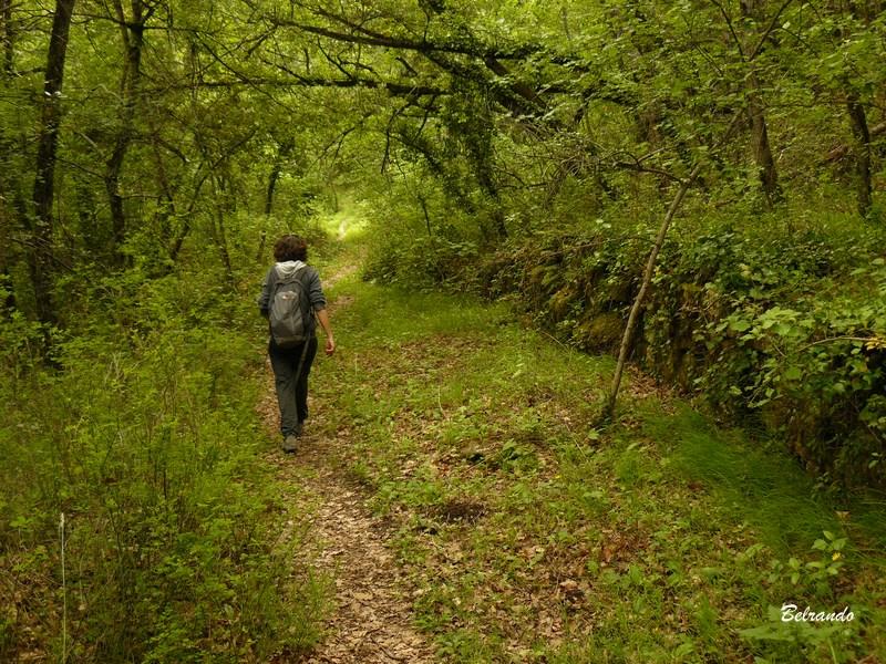 chemin traversant un bois de chênes