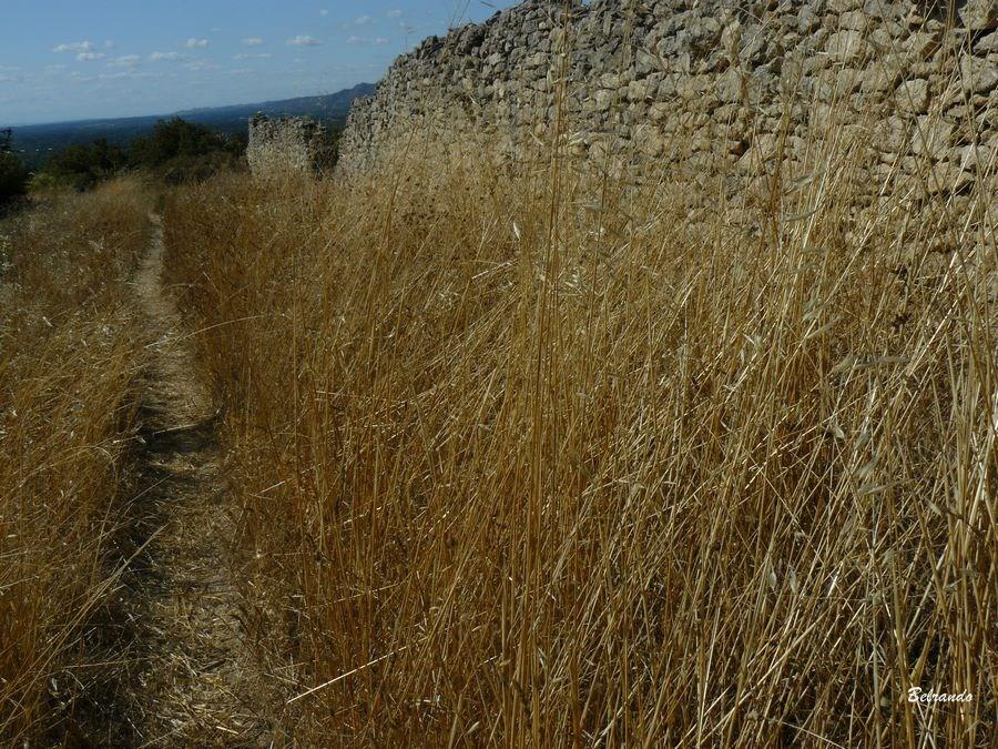 sentier tallagard et mur en pierres
