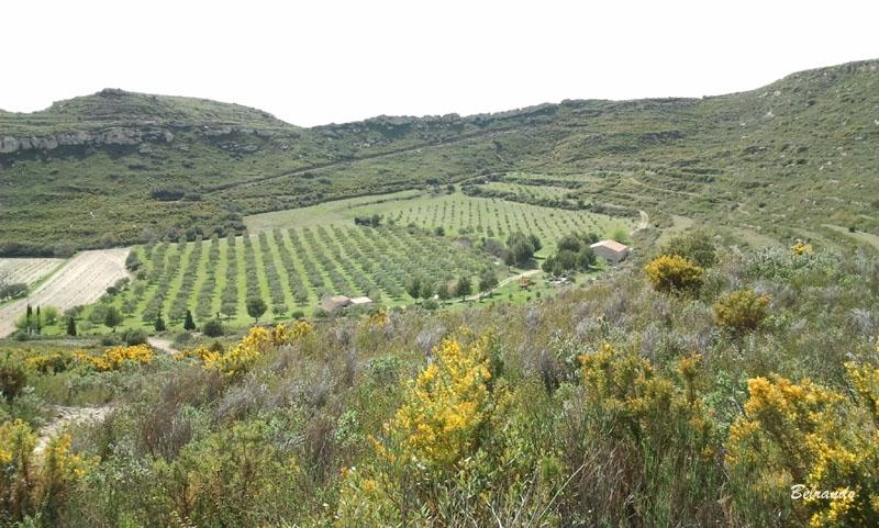 La piste conduit au Valdegon et ses oliveraies