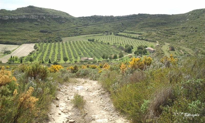 Le Valdegon et ses oliviers