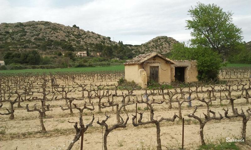 cabanon et vignes à pélissanne