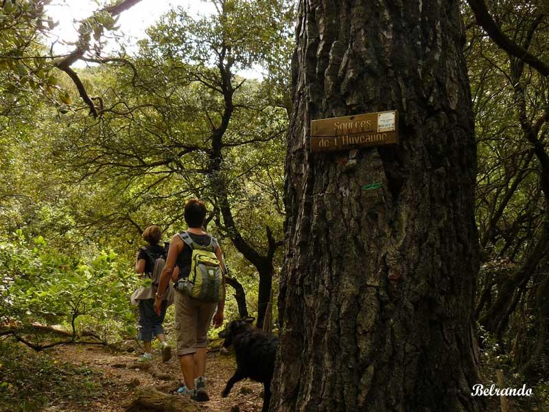 Sentier en direction de la source de l'Huveaune. Randonneuses et leur chien. des sources car elles ne sont pas très spéctaculaires...