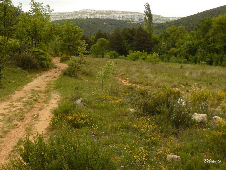 Sur le même sentier, vue arrière sur les falaises du plateau de la sainte-Baume