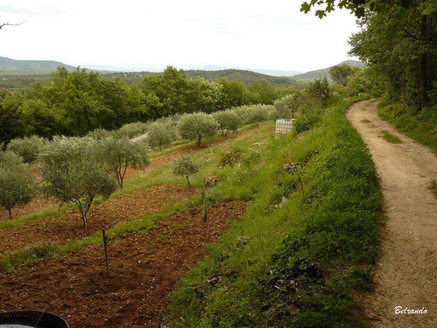 Chemin de retour sur le village et oliveraie