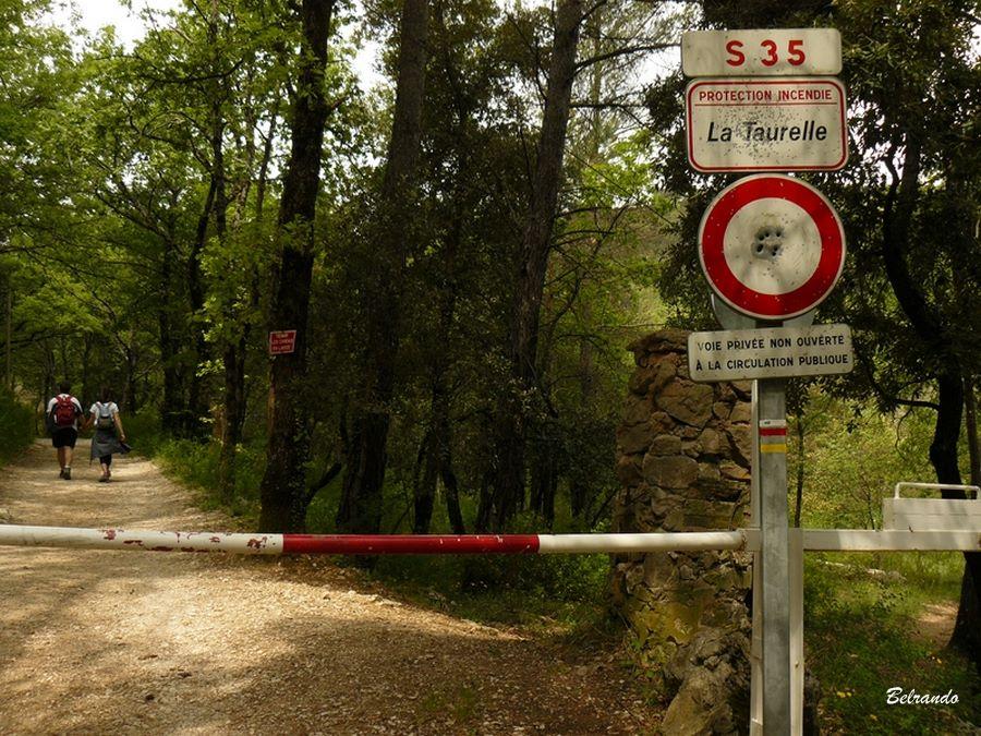 GR 9 passage dans les bois