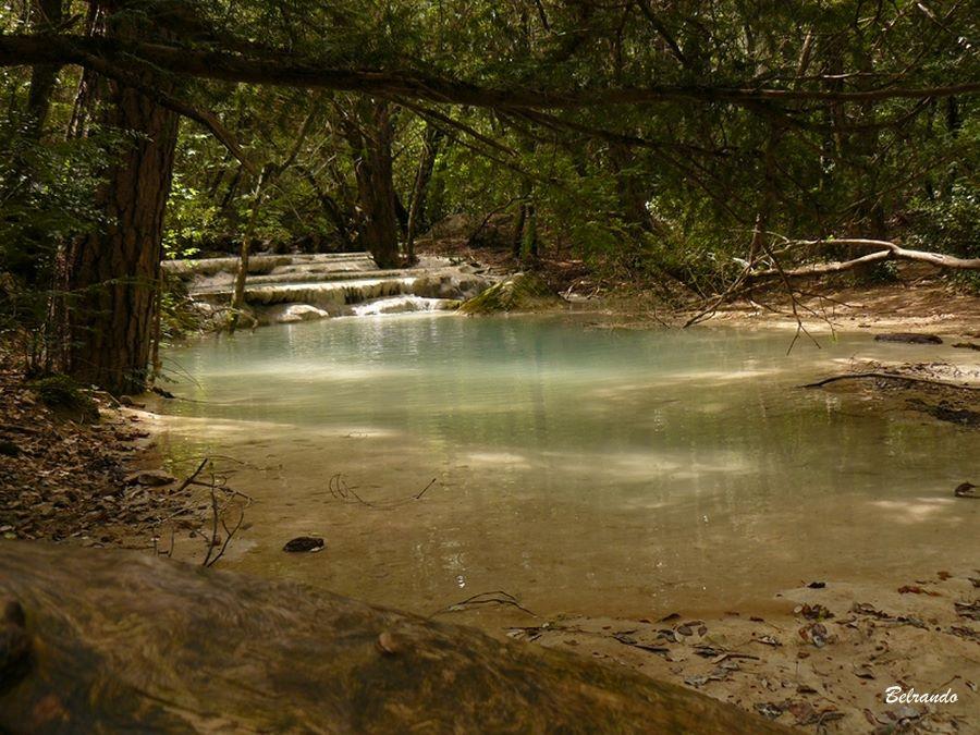 L'Huveaune et ses eaux laiteuses. On peut observer de nombreux arbres au tronc pris dans les dépôts de calcaire.