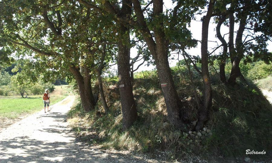 sentier arbres et balisage