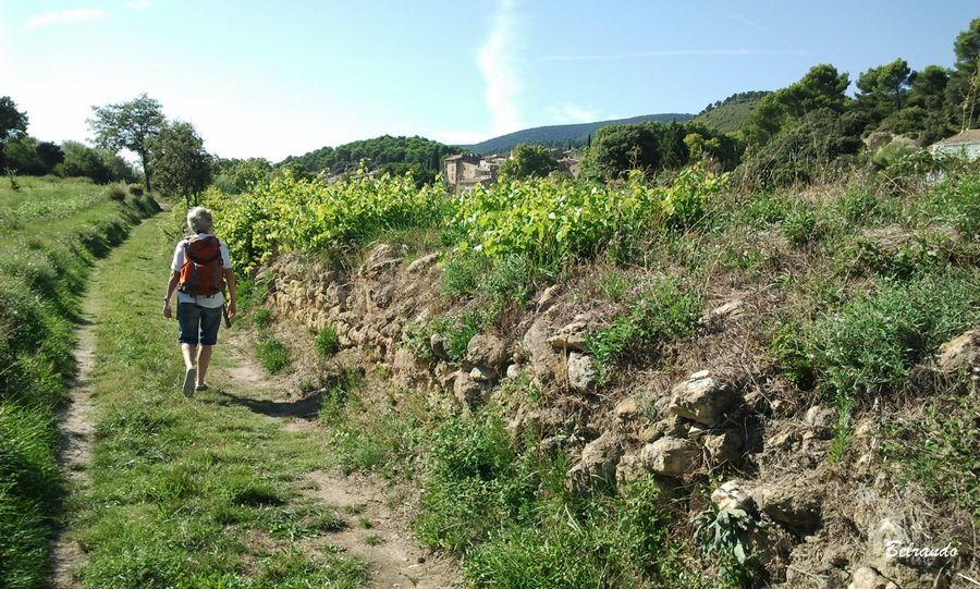 vaugine village au loin sentier et vignes