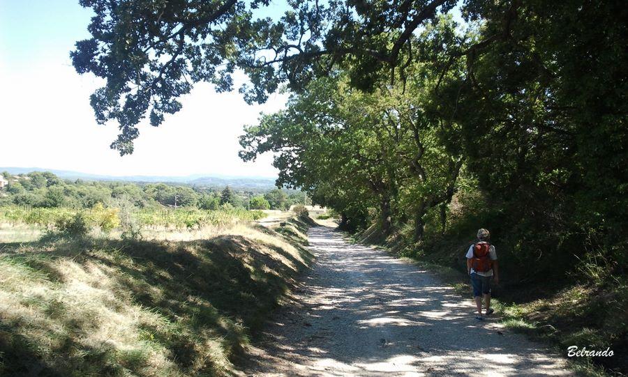 sentier entre l'ermitage et le village de cucuron