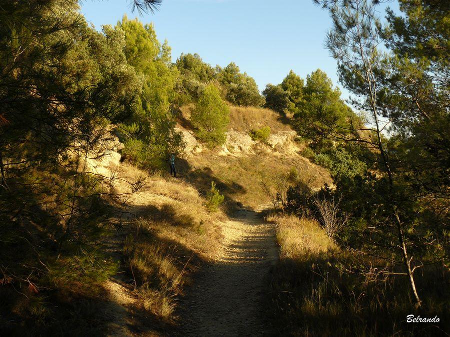 Un des sentiers qui longent sur plusieurs niveaux le plateau.