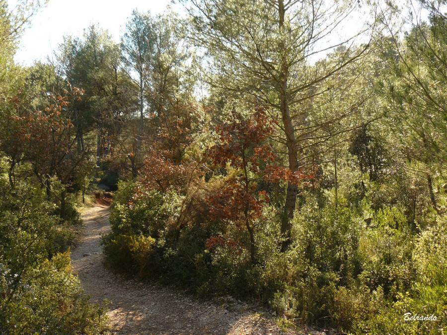 Le sentier boisé qui jouxte les prairies de Roques-Hautes.