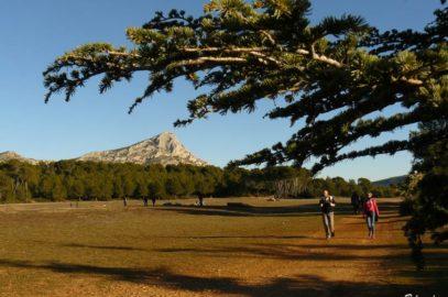 Vue sur le plateau et Ste Victoire et promeneurs