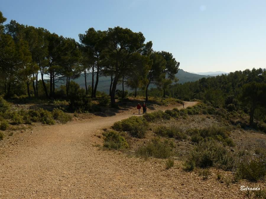 Vue arrière. Piste GR vers Roques-Hautes