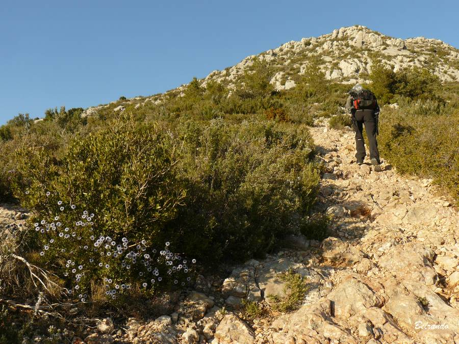 fleurs et Montée vers le sentier Imoucha.