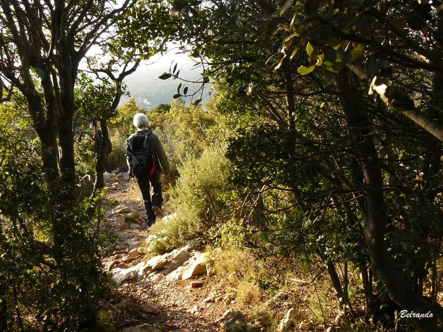 Buisson Passage sur le sentier Imoucha