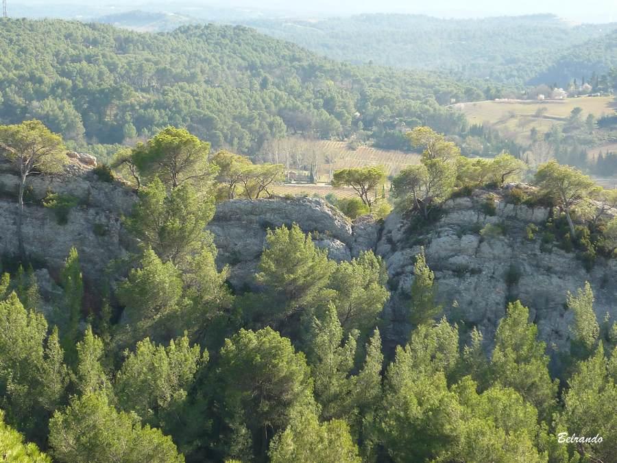 Les crêtes du Tholonet et leur pins