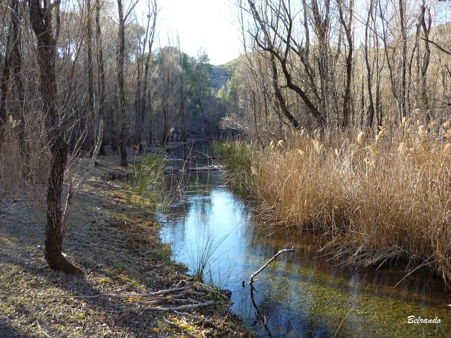 Le ruisseau la Cause dans le vallon des Infernets et sa ripisylve