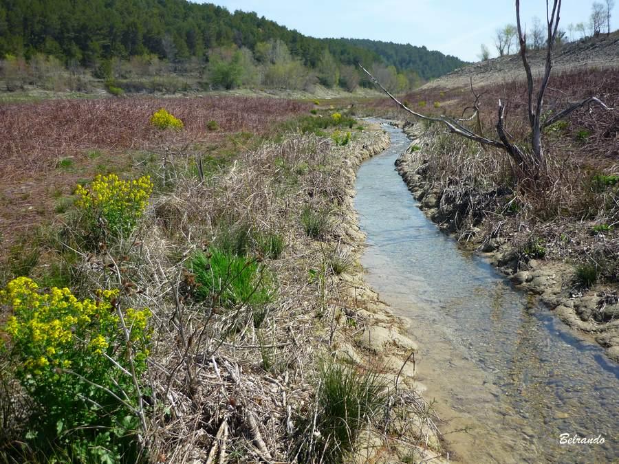 Le petit ruisseau la Cause