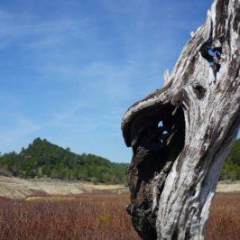 tronc d'arbre fond du lac de Bimont