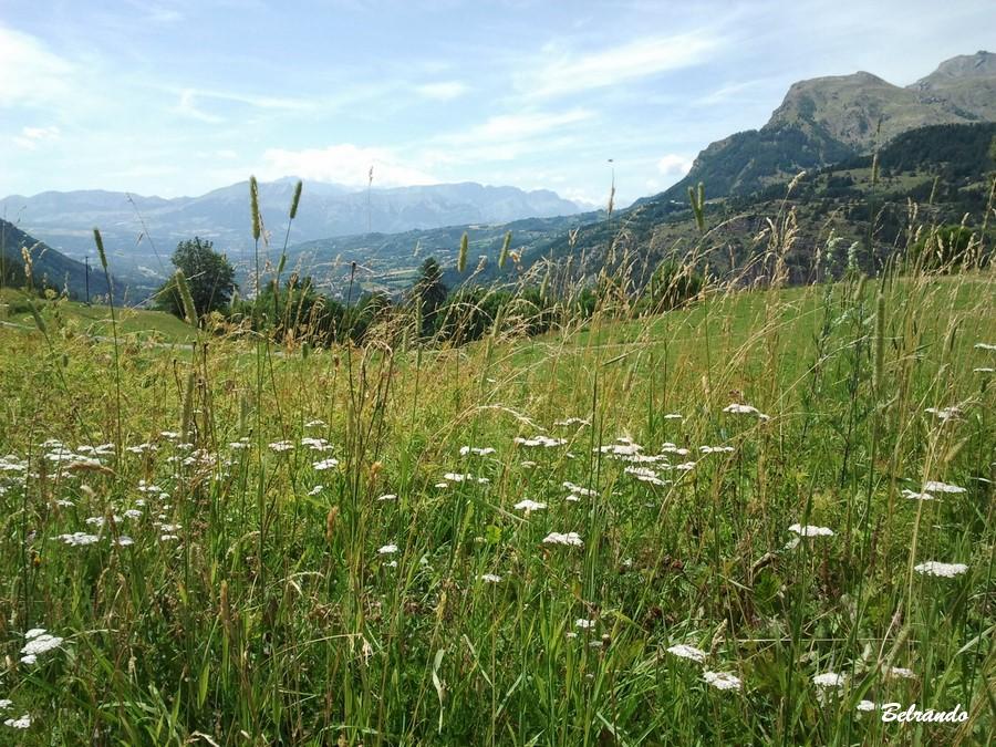 Prairie en 1er plan et au fond massif du Dévoluy.