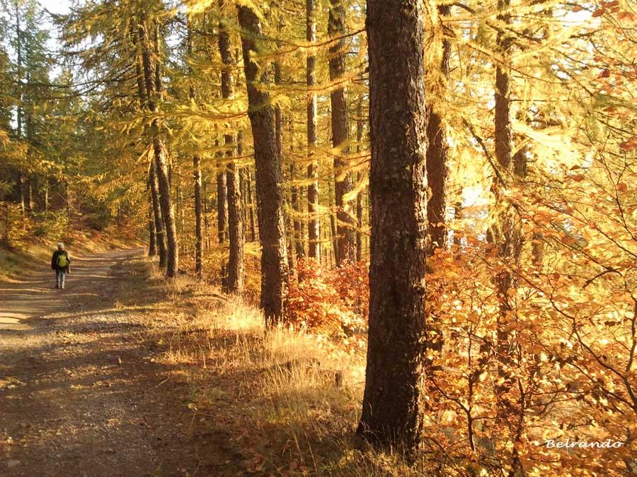 piste forestière station chaillol en automne