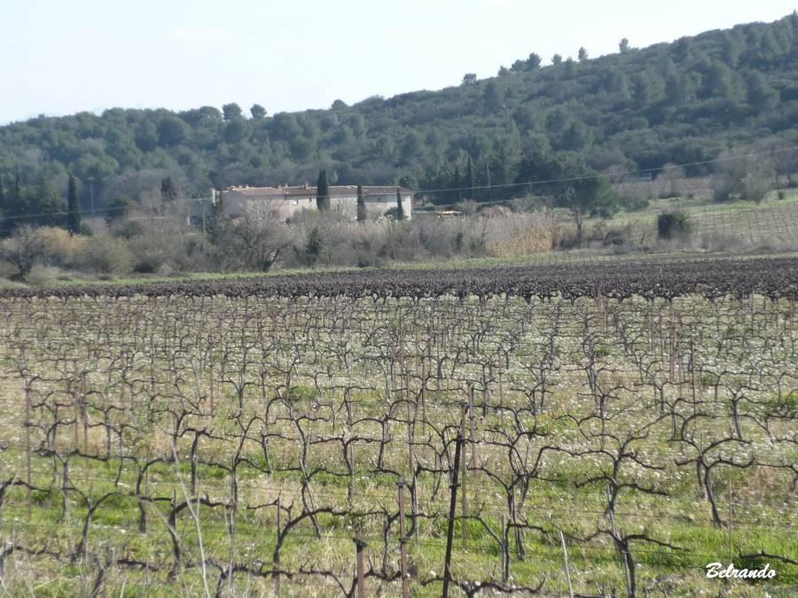 Vignes et hameau de Valsère