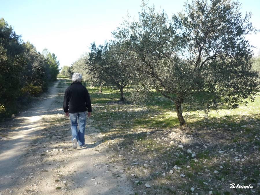 eguilles oliviers promeneuse