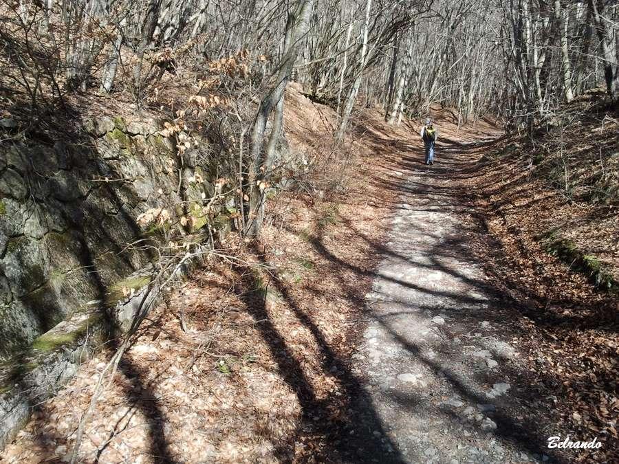 piste forêt Le mur de soutènement de l'ancienne voie ferrée.