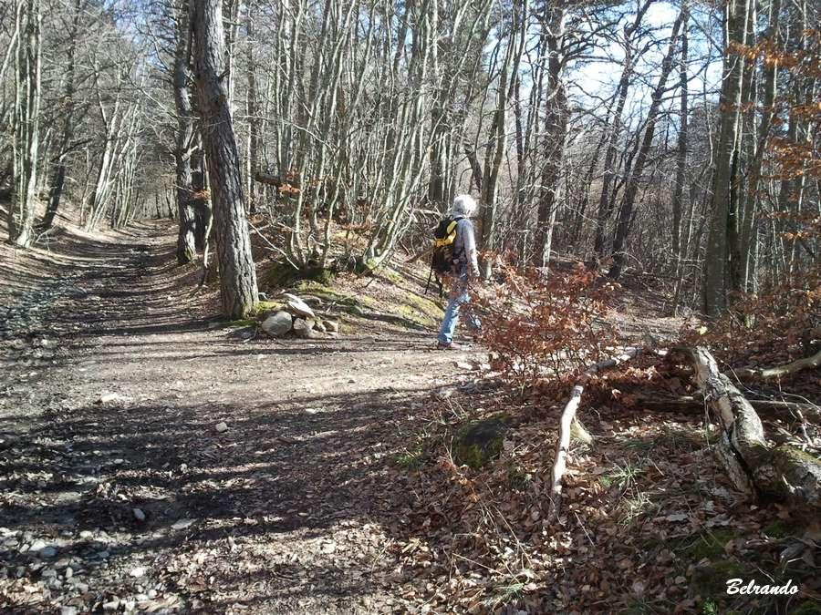 piste forêt