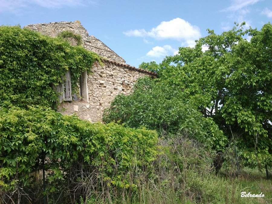 vestiges de la ferme du mazet enfouis sous la végétation.