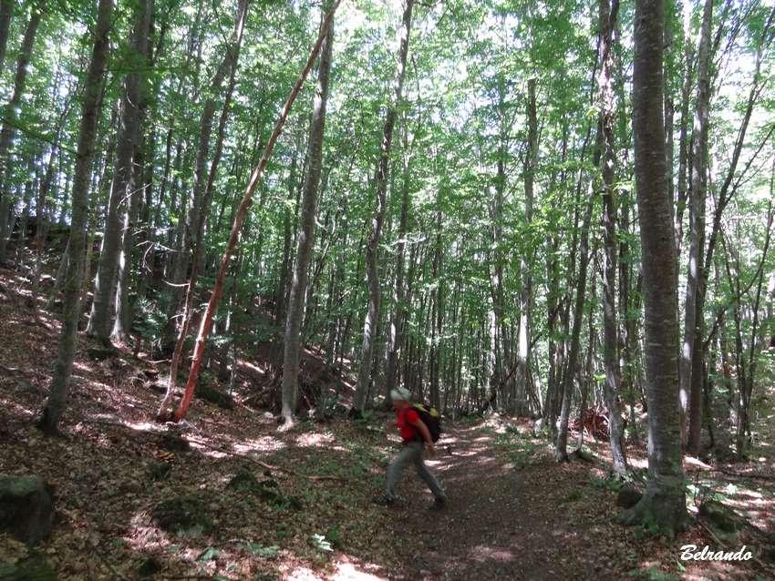 marcheuse dans la forêt du Pas de l'Ours