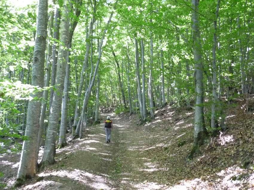 sentier et sous bois de feuillus